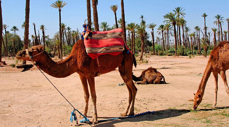 vacances au maroc DOSSIER : BIEN SE PRÉPARER AVANT UN DÉPART AU MAROC