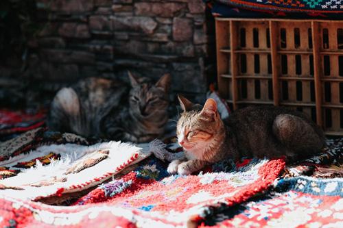 Bons Plans Voyage Maroc