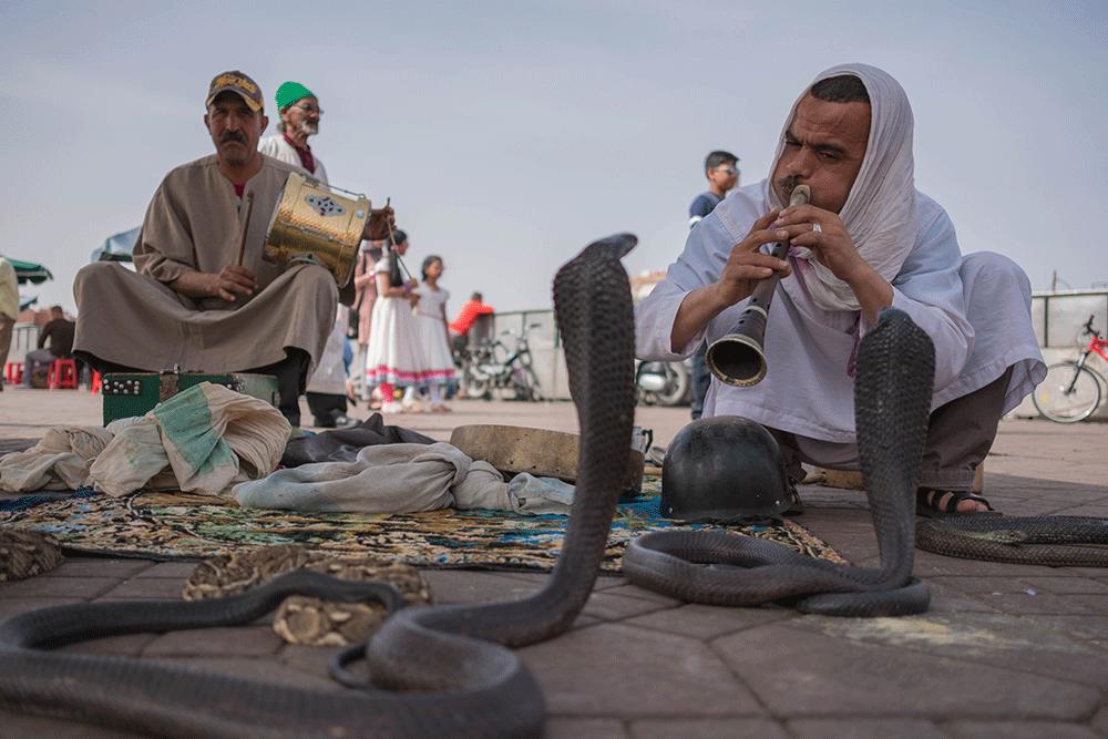 charmeur serpent marrakech